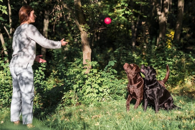 Woman throwing ball for her pets on meadow