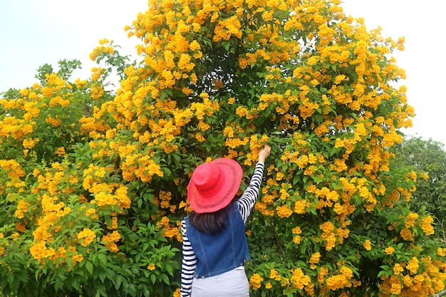 Woman touching a bunch of beautiful trumpetbush flowers blooming on the tree