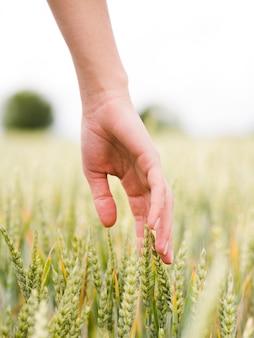 その手のクローズアップで小麦に触れる女性