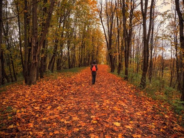 空を覆う木のアーチの下の暗い秋の林道にバックパックを持った女性観光客。