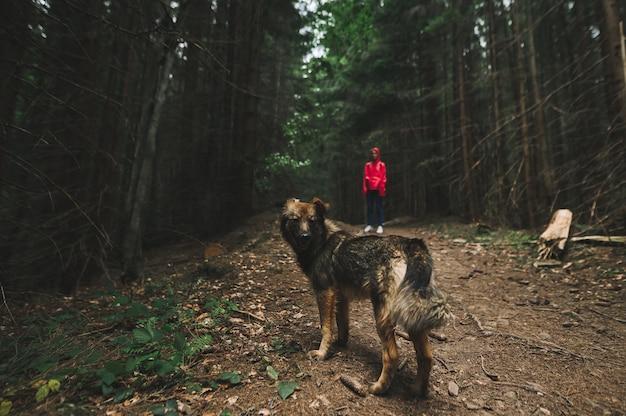 하이킹에 가이드와 함께 개를 가진 여자 관광