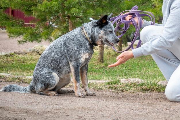 Тренировка женщины дает команду собаке