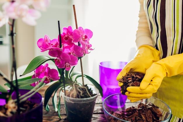 부엌에 있는 다른 냄비에 난초를 이식하는 여자. 가정 식물과 꽃을 돌보는 주부. 원예