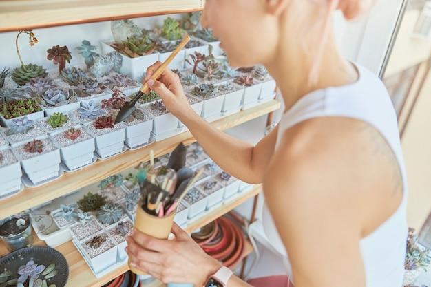 女性は明るい部屋に立っている小さなシャベルで美しい多肉植物を移植します