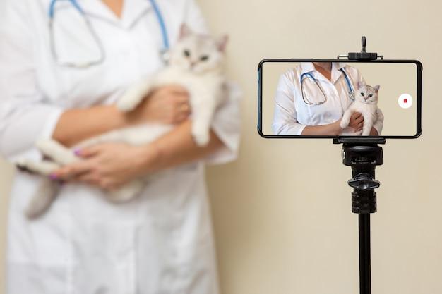 여성 수의사는 삼각대에 서있는 스마트 폰에 고양이의 검사를 기록합니다.