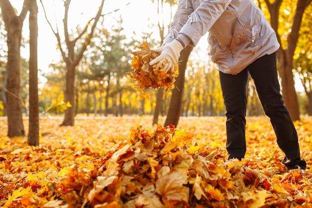 女性ボランティアが葉っぱを袋に集めます。秋の公園の葉を掃除します。秋の風景。