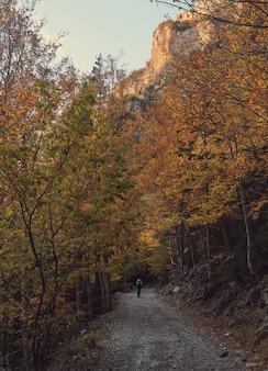 산에서 키 큰 나무에 둘러싸인 길을 따라 걷는 여자