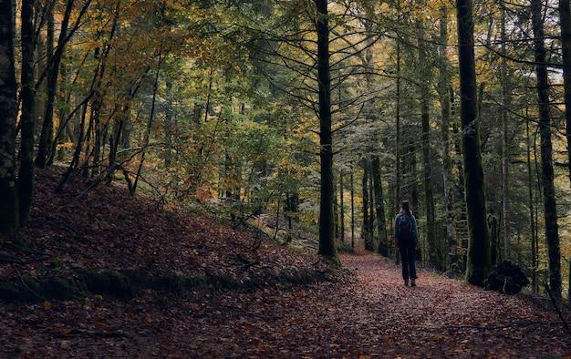 森の中を歩く女性。秋のイラティの森でのハイキング