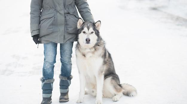 冬の街でアラスカンマラミュートと一緒に歩いている女性。