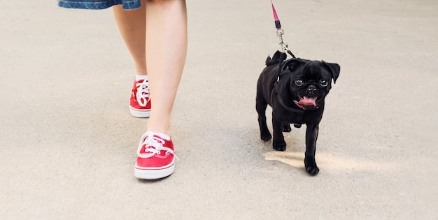 公園で犬と一緒に歩く女性
