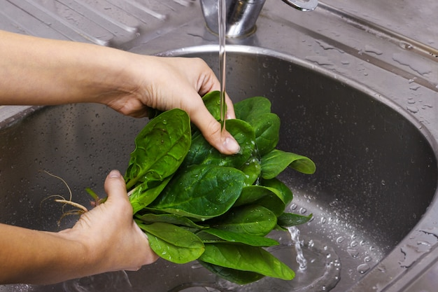 Woman washing spinach in sink. the girl is washing the spinach