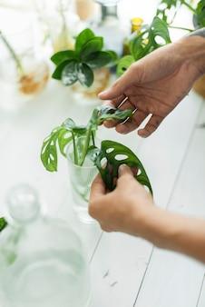 彼の観葉植物を繁殖させる女性の水