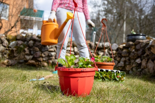 Woman watering potted flowers from a garden watering can in the backyard of a house in spring. diy concept
