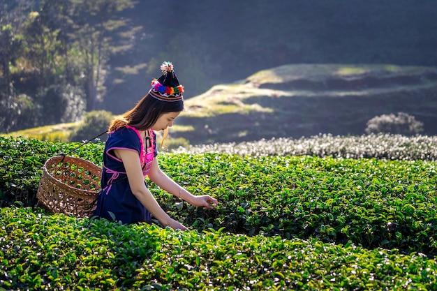 Женщина в платье горного племени, сидя на хижине в поле зеленого чая.