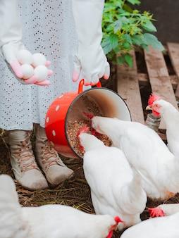 여자 흰 고무 장갑, 닭장에서 방목 닭에게 빨간 냄비에서 곡물을 먹이는 계란을 수집합니다.