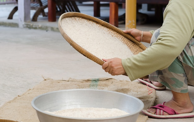 Woman winnowing rice by using bamboo basketwork outdoor