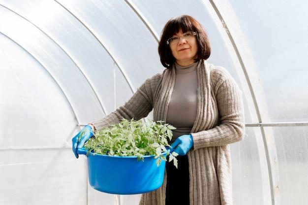 温室でトマトの苗のバケツを持つ女性