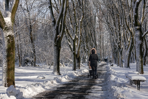 A woman with a baby stroller walks along a snow-covered alley of a city park. unidentified woman with her back to the viewer in the distance in a jacket with a hood. snow forest alley.