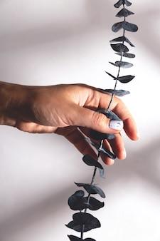 Женщина с красивым минималистским маникюром держит веточку эвкалипта