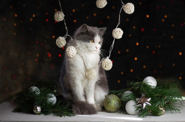 自宅のクリスマスツリーの近くに猫を持つ女性。クリスマスツリーの上の猫と女性。