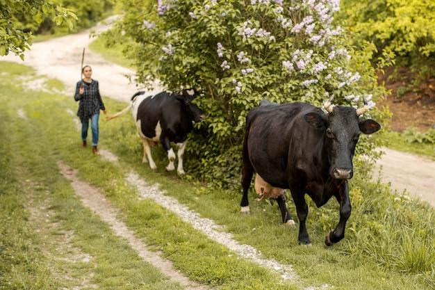 フィールド上の牛を持つ女性
