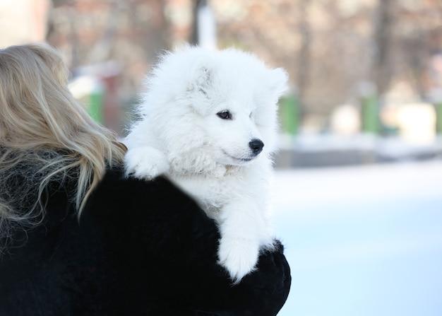 冬の日に屋外でかわいいサモエド犬を持つ女性