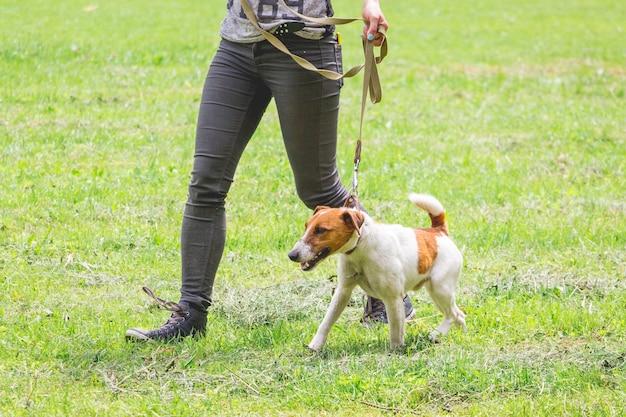 散歩中にひもにつないで犬と女性