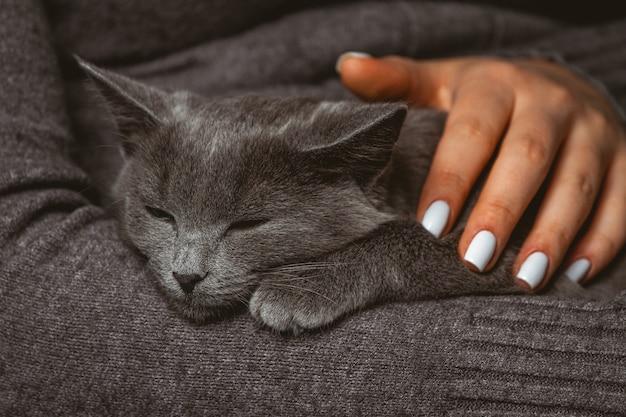 手に国内の灰色の猫を持つ女性