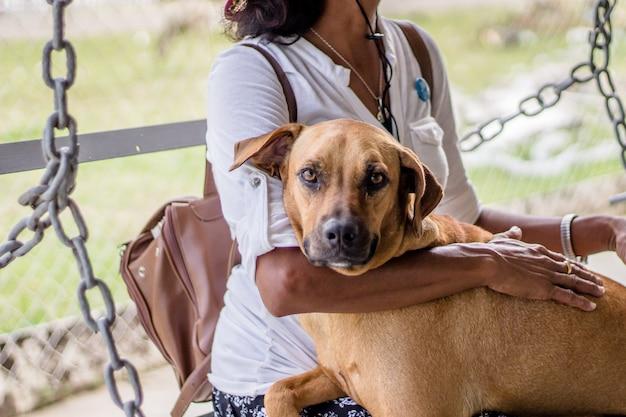茶色のコンパニオン犬に彼女の手を持つ女性