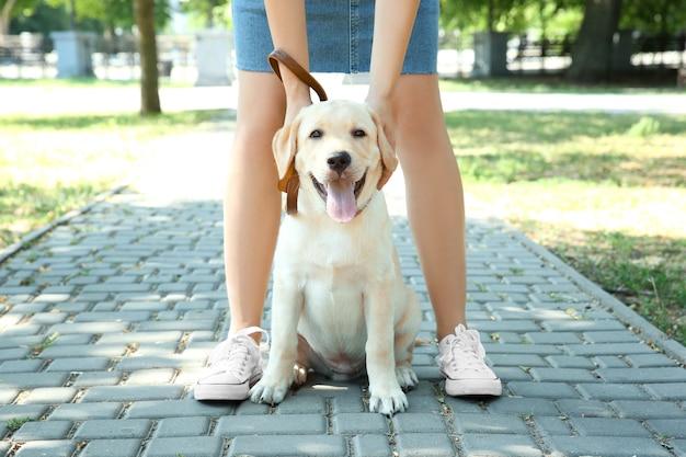 屋外でラブラドール犬と女性