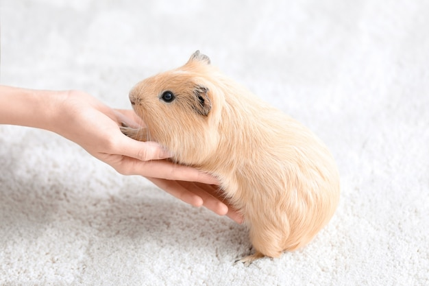 Woman with pet guinea pig at home