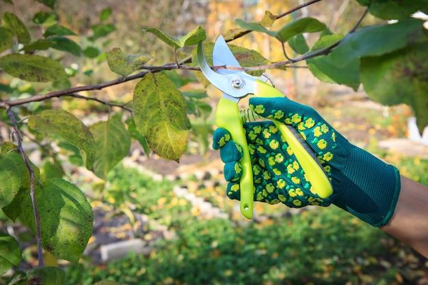 Pruner가 위 나무의 끝을 가진 여자입니다.