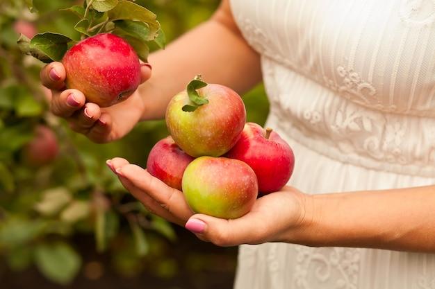 手で熟したリンゴを持つ女性。リンゴの収穫。秋のコンセプトです。