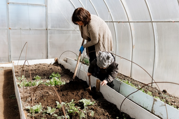 Woman with a small boy grandson plant vegetable seedlings in a greenhouse