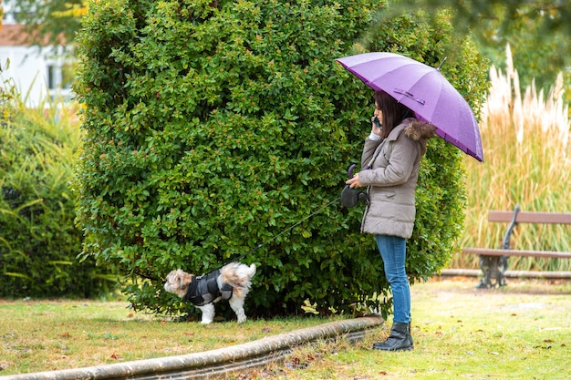 Woman with umbrella walking in the park with her dog in the rain miters talking on the phone