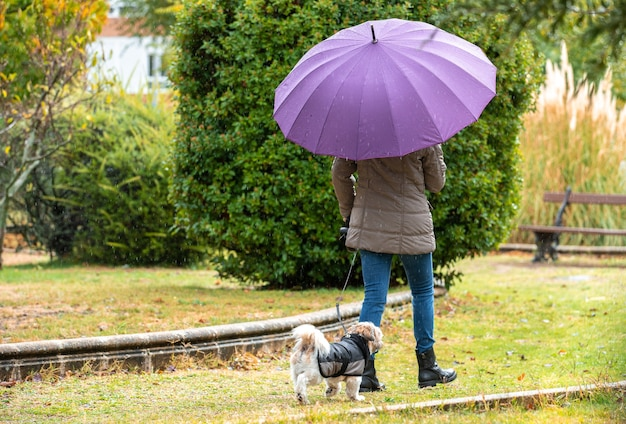 Woman with umbrella walking in the park with her dog in the rain