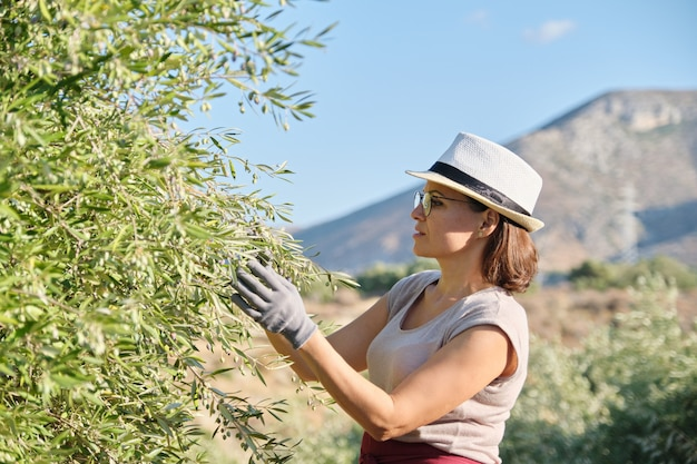 Woman worker of an olive farm, background olive garden in the mountains