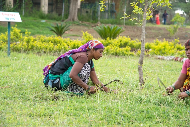 Woman workers cutting unwanted grass from garden field