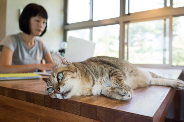 テーブルの上に横たわっている猫と一緒に在宅勤務の女性
