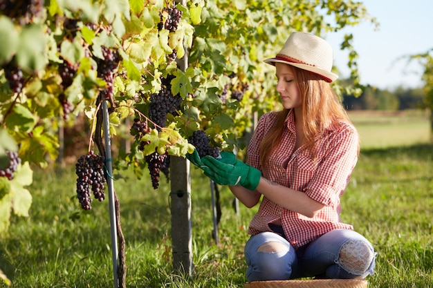 Woman working in a vineyard