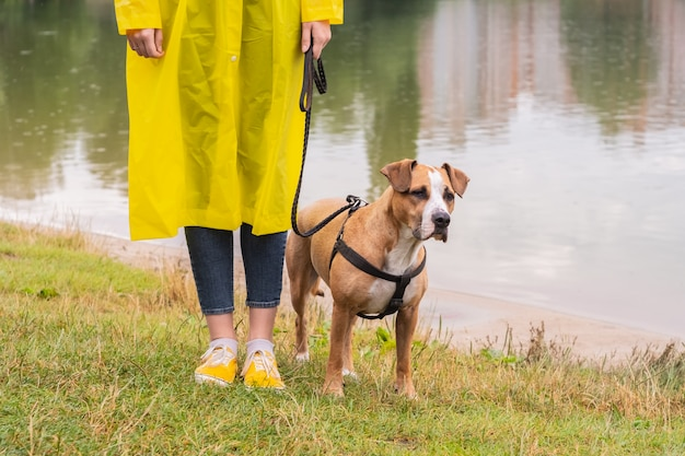 Woman in yellow raincoat and shoes walks the dog in rain at urban park near lake. young female person and pitbull terrier puppy stand in bad weather near river