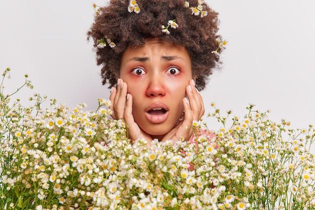 女性グラブはあえぎに直面し、カモミールの花に囲まれたアレルギーのために息切れがあり、白い壁に赤いかゆみのある目が孤立しています