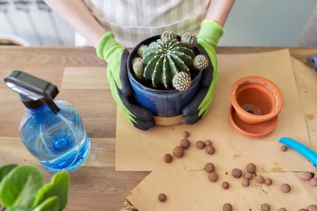 鍋に若いサボテンの植物を植える手袋をはめた女性の手。趣味、レジャー、観葉植物、家庭菜園、鉢植えの友達のコンセプト