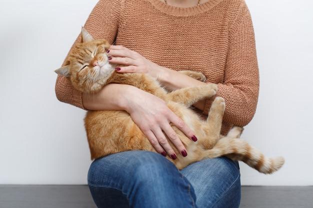 梨花の手が自宅の部屋で健康的な赤い猫をなでます。人間の手のケアとなでるふわふわ猫をクローズアップ。所有者は満足した銃口で面白い猫を撫でます。ペットとライフスタイルのコンセプト