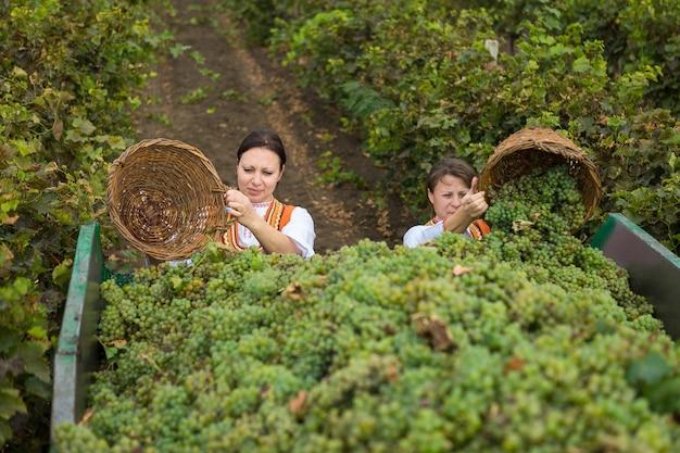 ワイン農園で働く女性民族衣装を着た田園風景の農夫
