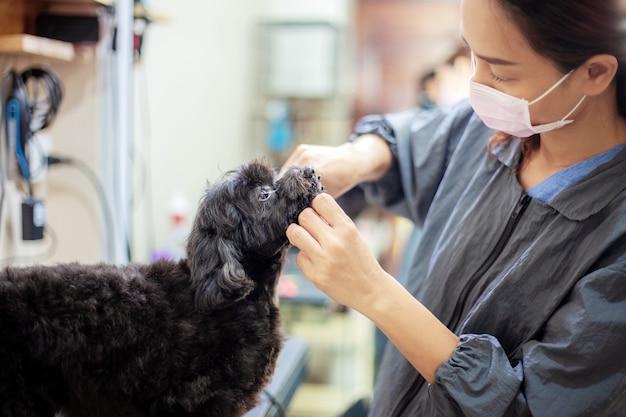 女性は犬を掃除しています。