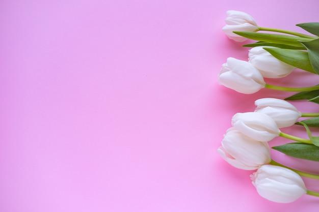 女性の日。母の日。ピンクの背景に白いチューリップ。春の花。花の背景。
