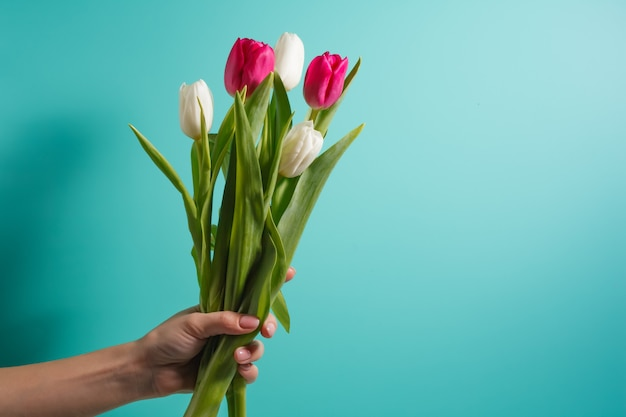 Women hand holding flowers on blue background. bouquet of white and pink tulips for birthday, happy mothers or valentines day and 8 march. stock photo