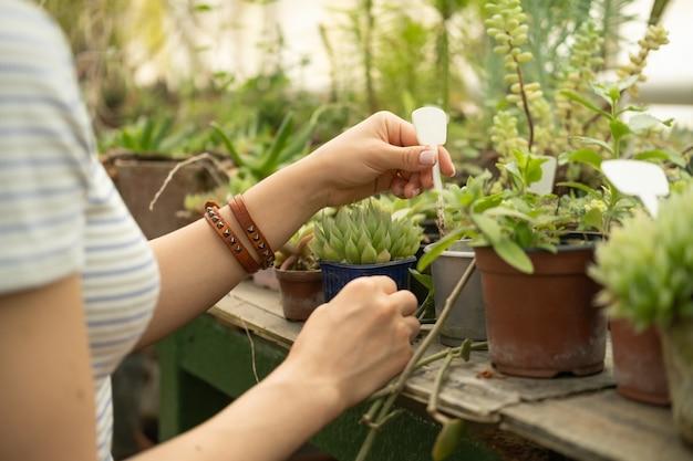 温室で粘土とプラスチックの鉢に多肉植物を持っている女性の手。家庭用植物、苗の販売。