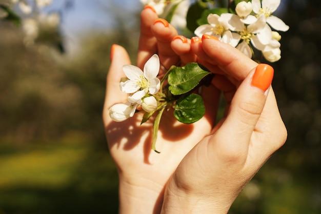 女性の手は花で咲くリンゴの木を保持します。閉じる。花の咲く庭の春のコンセプト